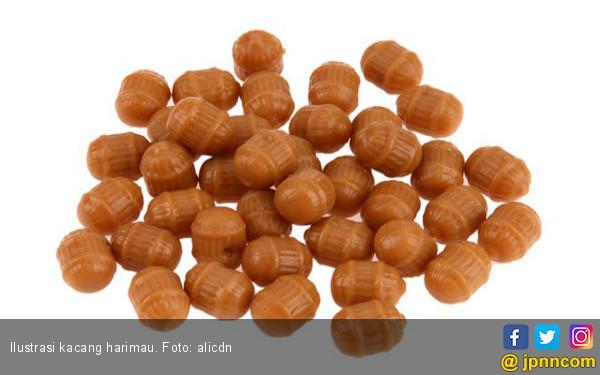 Manfaat Kacang Harimau untuk Kesehatan - JPNN.COM
