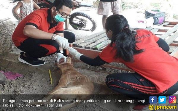 Denda 1 Ton Beras untuk Pemilik Anjing Rabies - JPNN.COM