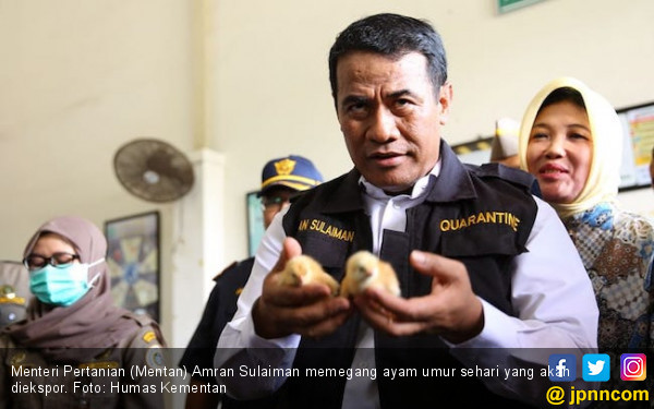 Ekspor Anak Ayam ke Timor Leste Terus Meningkat - JPNN.COM