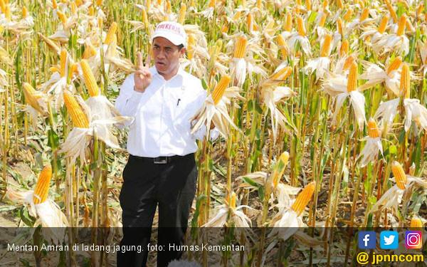 Indonesia Tingkatkan Produksi Padi dan Jagung - JPNN.COM