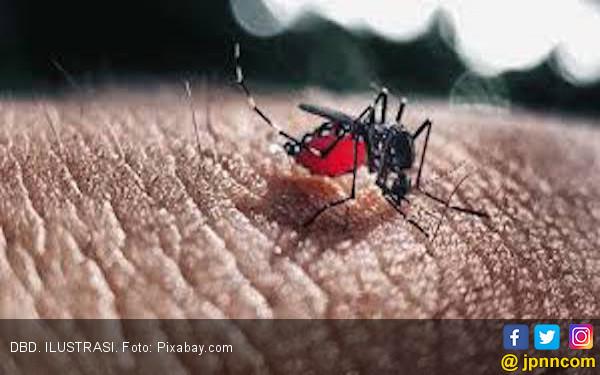 Cara Praktis Membuat Perangkap Nyamuk, Hasilnya Efektif!