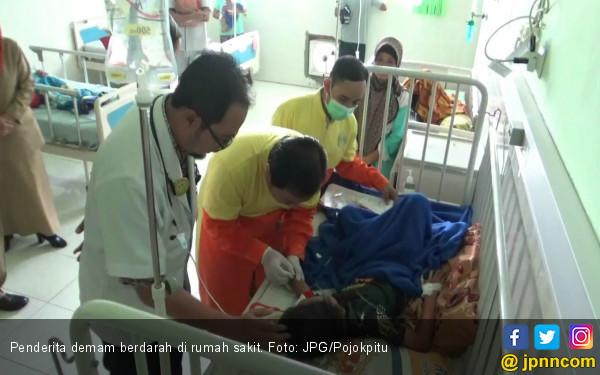 Waspada Demam Berdarah, Jangan Tunda Periksa ke Dokter - JPNN.COM