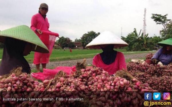 Kebijakan Ekspor Bawang Merah Patut Dievaluasi - JPNN.com