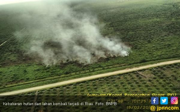 53 Hektare Lahan di Rohil dan Pelalawan Hangus Terbakar - JPNN.com