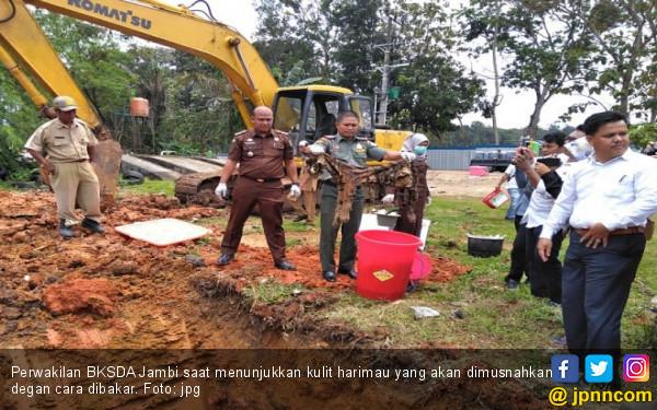 Kejari Jambi Musnahkan Kulit Harimau, Narkoba dan Gading Gajah - JPNN.com