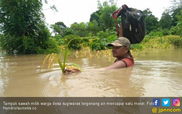 Terendam Banjir, Sepuluh Hektare Sawah di Desa Sugiwaras Gagal Panen - JPNN.com