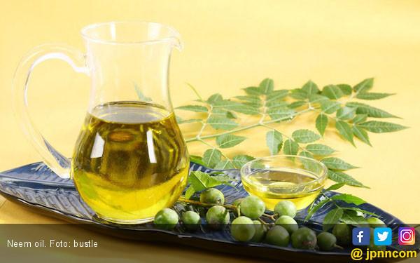 Kenali 7 Khasiat Neem Oil untuk Kecantikan Kulit dan Rambut - JPNN.com