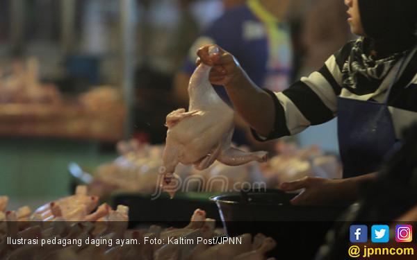 Harga Ayam Anjlok di Tingkat Peternak, Ada Permainan? - JPNN.com
