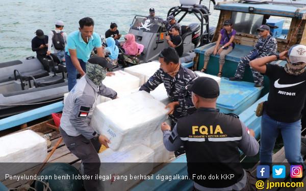 KKP Gagalkan Penyelundupan 245 Ribu Benih Lobster di Batam, Nilainya Fantastis - JPNN.com