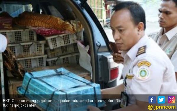 Penyeludupan Ratusan Ekor Burung dari Riau Berhasil Digagalkan - JPNN.COM