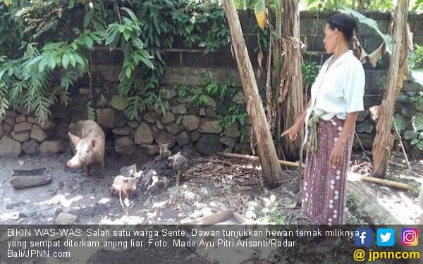 Anjing Liar Serang Hewan Ternak, Warga Waswas - JPNN.com