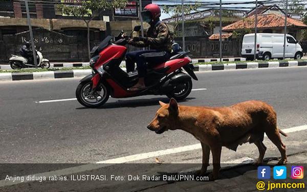 Anjing Diduga Positif Rabies Terkam Empat Warga di Jembrana - JPNN.com