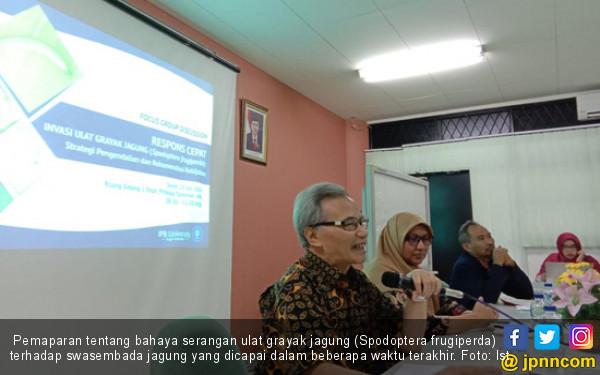 Hama Ulat Grayak Ancam Swasembada Jagung - JPNN.com