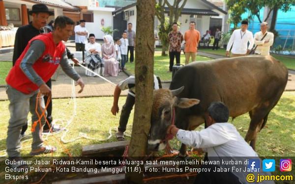 Ridwan Kamil Memantau Penyembelihan Hewan Kurban - JPNN.com