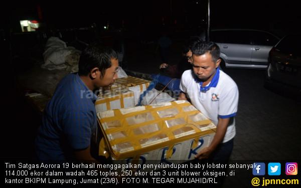 Satgas Aorora 9 Gagalkan Penyeludupan Baby Lobster Senilai Rp 17 Miliar ke Vietnam - JPNN.com
