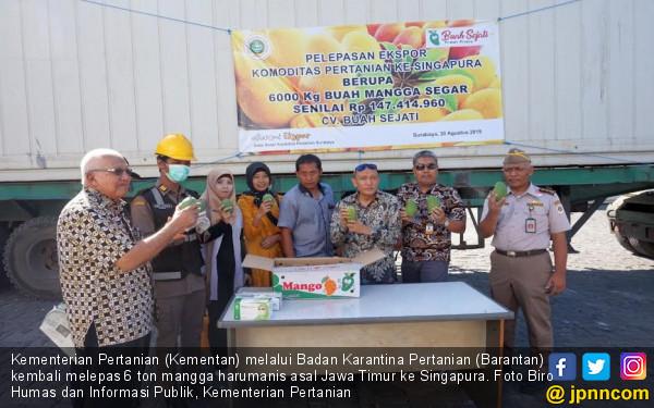 Mangga Jawa Timur Makin Laris di Pasar Singapura - JPNN.com