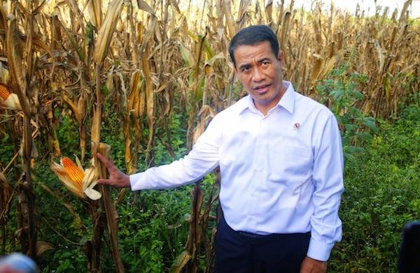 Pembangunan Pertanian Dianggap Sukses dengan Melejitnya Ekspor - JPNN.com