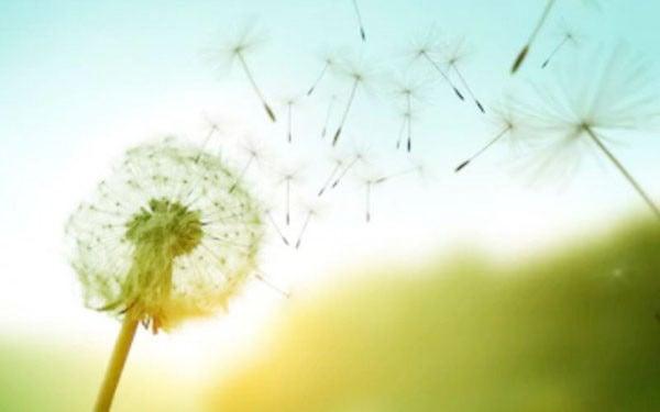 Tak Hanya untuk Dekorasi, Bunga Dandelion juga Bermanfaat untuk Kesehatan - JPNN.com