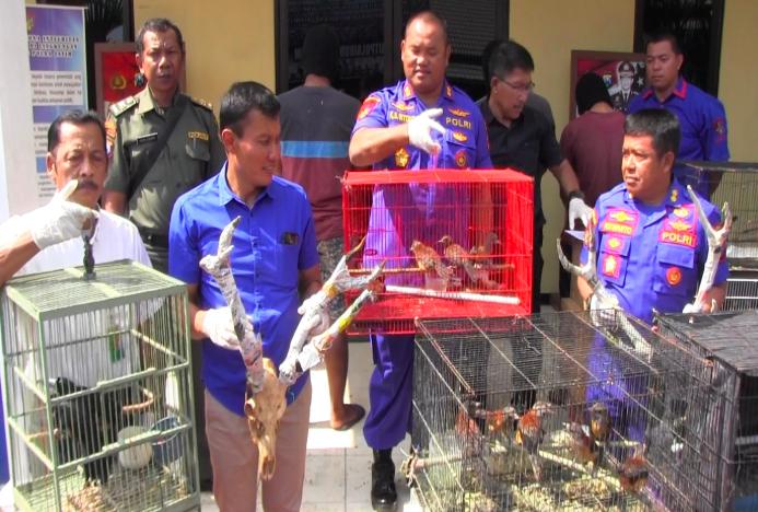 Gagalkan Penyelundupan Ratusan Burung Langka dari Papua
