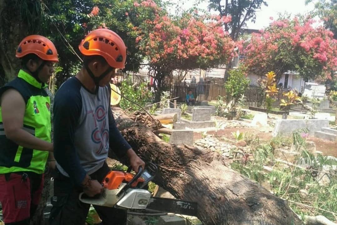 Puluhan Makam di Bogor Tertimpa Pohon Petai - JPNN.com