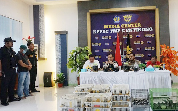 440 Burung Kacer Asal Malaysia Berhasil Diamankan Bea Cukai Entikong - JPNN.com