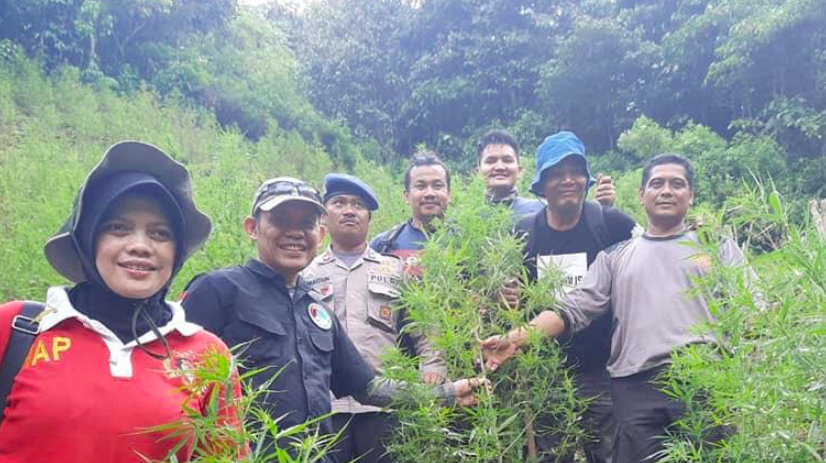 Ratusan Ribu Batang Ganja Bernilai Miliaran Rupiah Dibakar di Hutan - JPNN.com