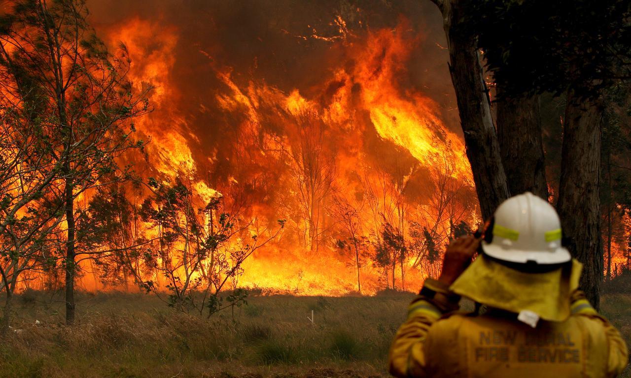 KLHK Minta Masyarakat Belajar dari Kebakaran Hutan Australia - JPNN.com