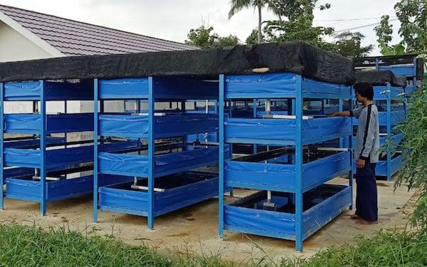 Budidaya Cacing Sutra Sistem Apartemen Dinilai Lebih Unggul - JPNN.com