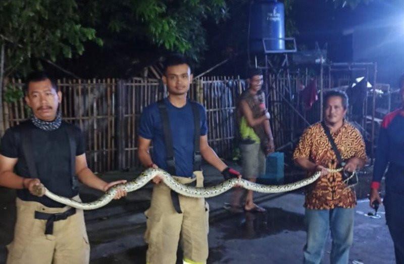 Ular Sanca Bersarang di Belakang Kulkas Milik Bu Sisilia, Ngeri Banget - JPNN.com