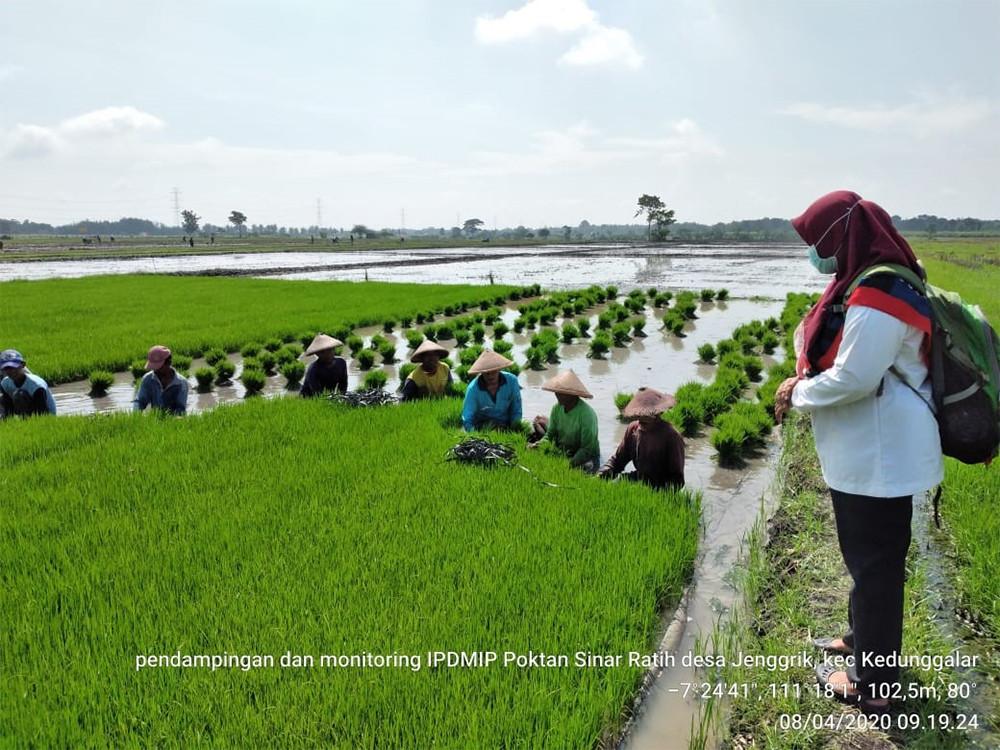 Penyuluh dan Petani Ngawi Modifikasi Pertemuan SL Untuk Percepatan Tanam - JPNN.com