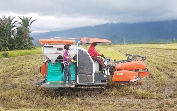 Amankan Stok Pangan, Merauke Percepat Tanam Padi - JPNN.com