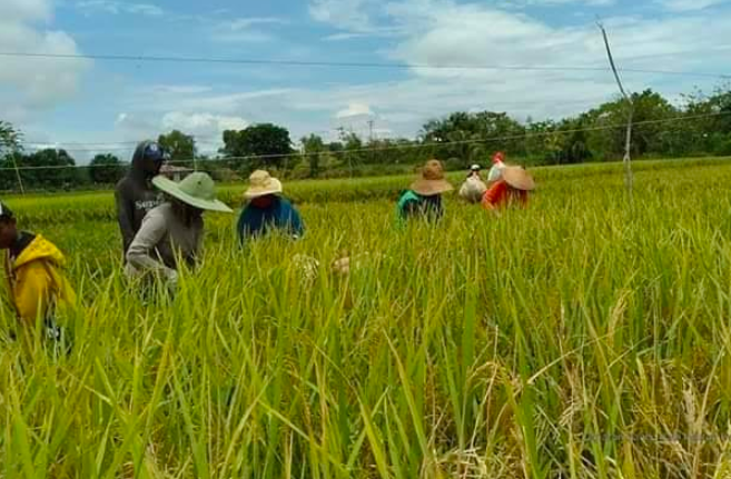 Didukung Ketersediaan Pupuk Subsidi, Petani Subang Percepat Tanam - JPNN.com