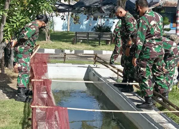 Lanal Denpasar Kembali Menebarkan Ribuan Benih Ikan Lele - JPNN.com