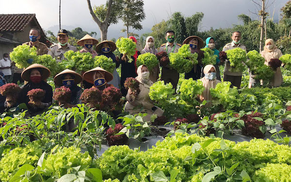 KWT Binama Manfaatkan Lahan Pekarangan Tanam Sayuran Berkualitas - JPNN.com