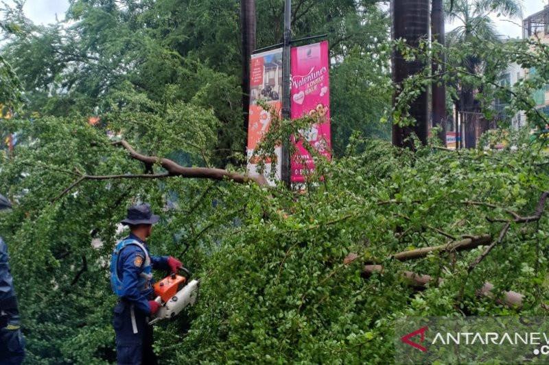 Anak Buah Anies Baswedan Tebang Puluhan Pohon di Jakarta Pusat - JPNN.com