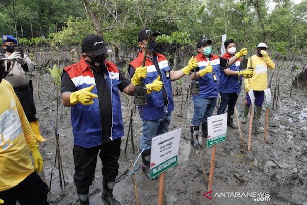 Top! Pertamina Tanam Ribuan Bibit Mangrove di Pesisir Balikpapan - JPNN.com