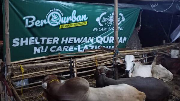 NU Care – LAZISNU Salurkan Hewan Kurban - JPNN.com