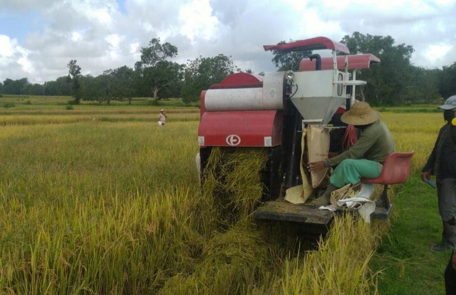 PDB Pertanian Melesat Positif di Triwulan II - JPNN.com