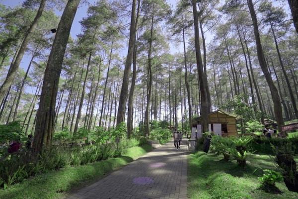 Inilah 7 Alasan Orchid Forest Jadi Spot Wisata Bandung Terpopuler - JPNN.com