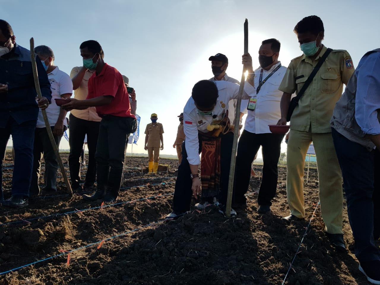 Mentan SYL Tanam Jagung dan Siapkan Food Estate di Sumba Tengah - JPNN.com