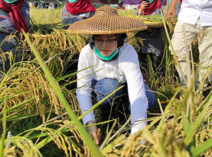 Hari Tani Nasional 2020, Bupati Purwakarta Apresiasi Program Terobosan Kementan - JPNN.com