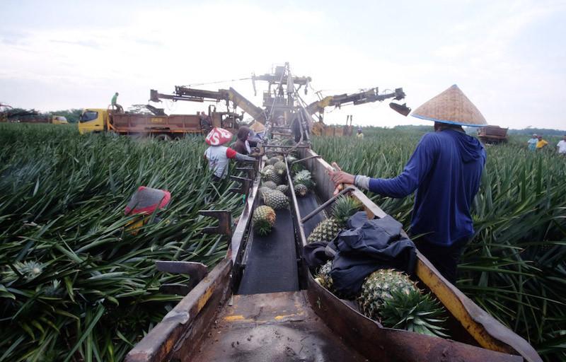 Bea Cukai Maluku Kembangkan Kawasan Berikat Holtikultura - JPNN.com