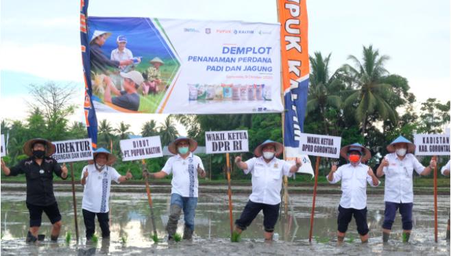 Pupuk Kaltim Kenalkan Pola Pemupukan Berimbang kepada Petani di Gorontalo - JPNN.com