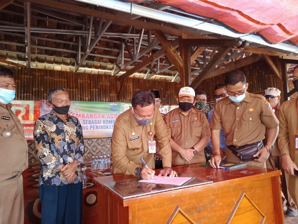 Budidaya Komoditas Ekspor Talas Beneng Akan Dilakukan Besar-besaran - JPNN.com