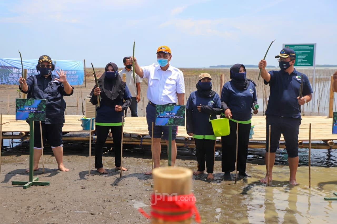 Bu Siti Nurbaya, Pak Luhut dan Pak Edhy Tanam Mangrove di Brebes - JPNN.com