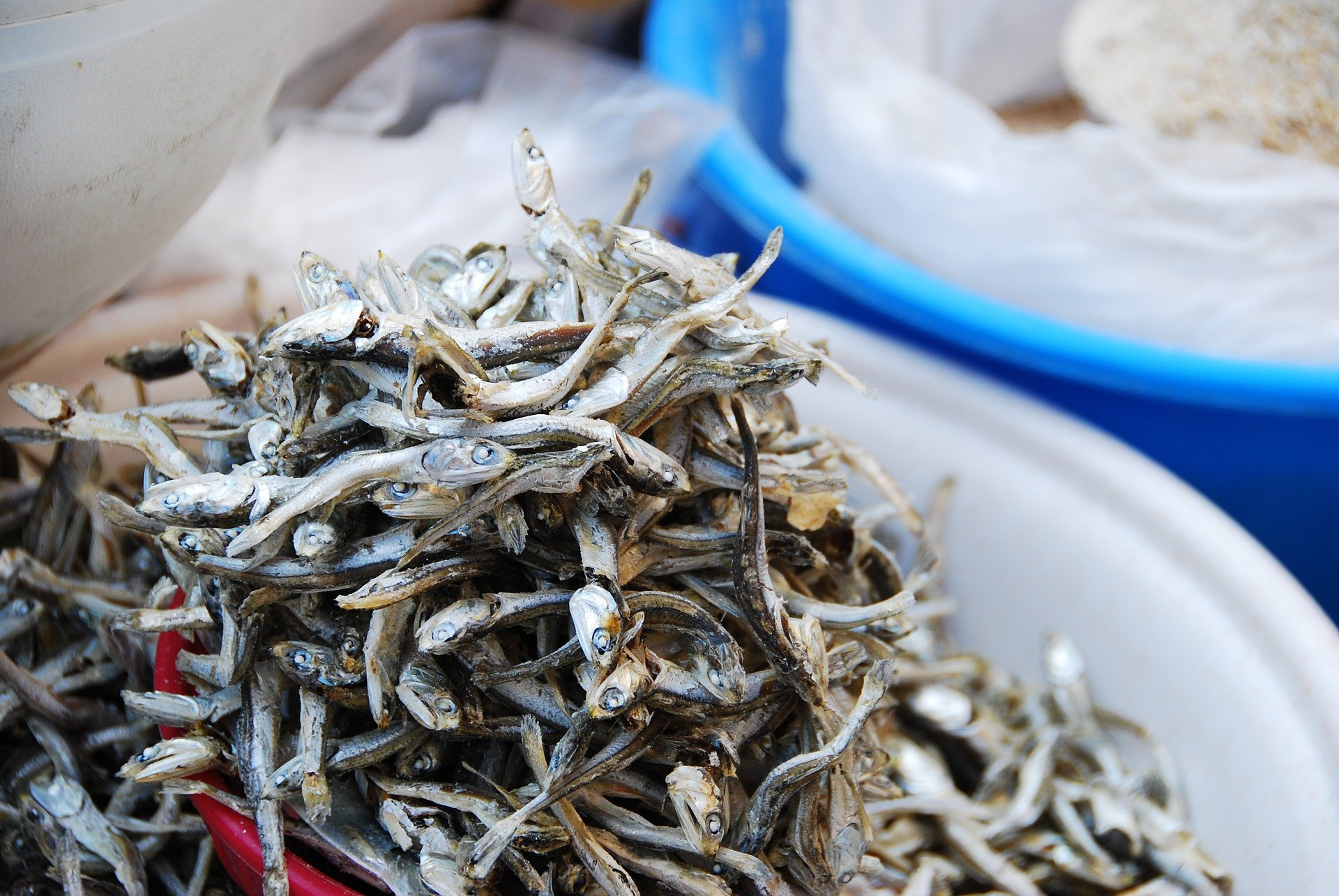 Doyan Ikan Teri, Ini Lho 5 Manfaatnya untuk Tubuh - JPNN.com