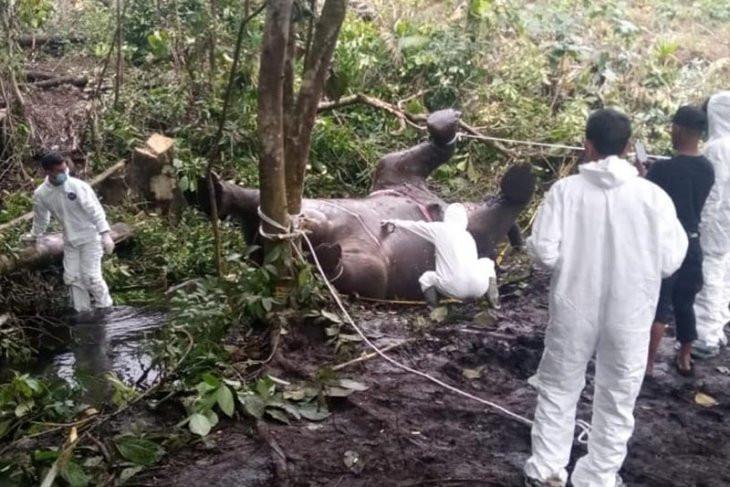 BKSDA Ungkap Penyebab Kematian Gajah di Bener Meriah - JPNN.com