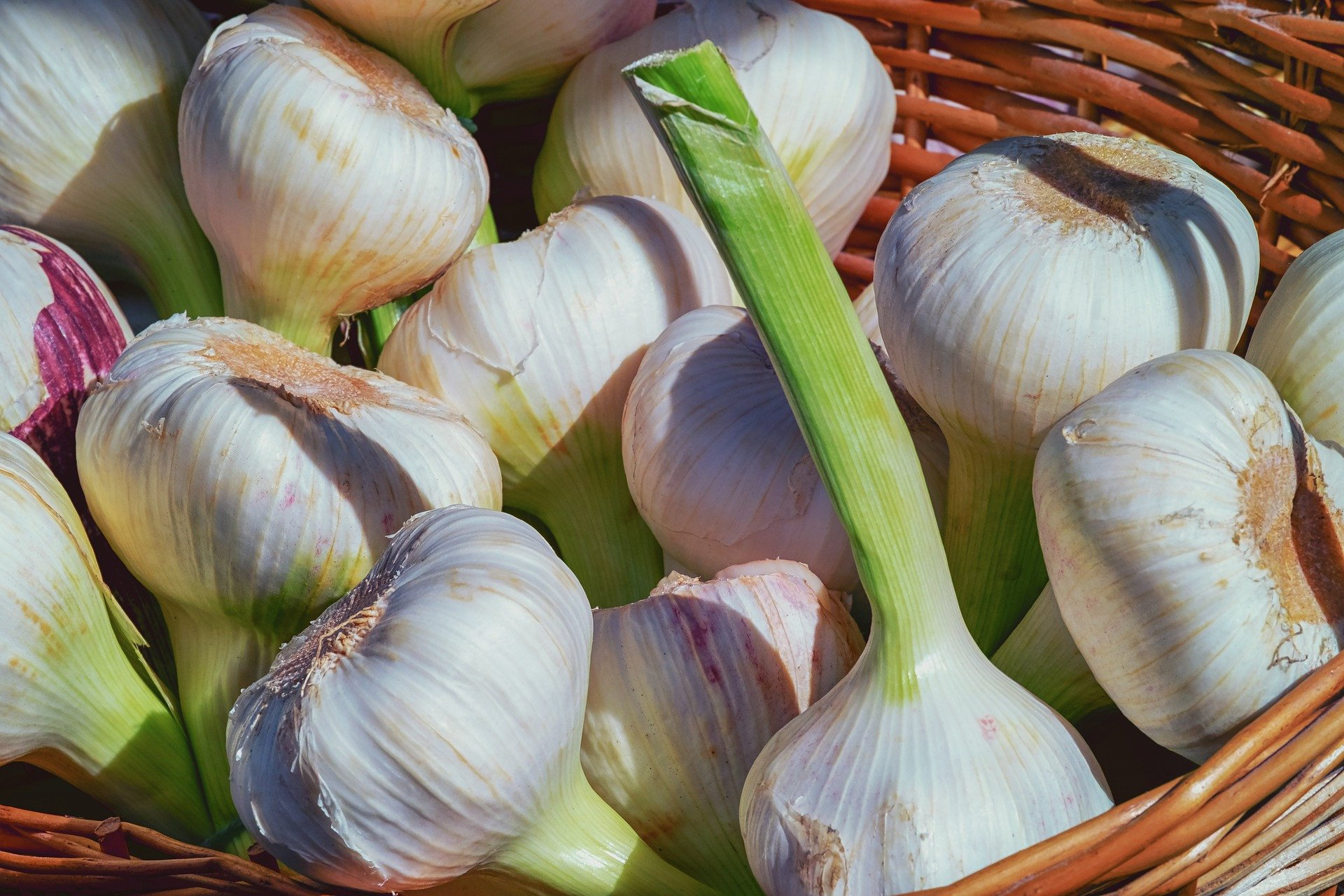 8 Benefits of Garlic for Men, One of which is to Increase Stamina - JPNN.com