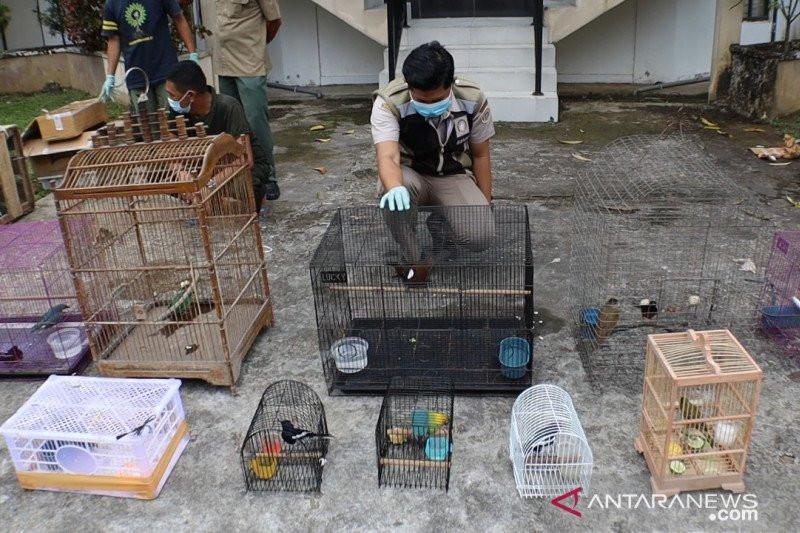 Tim Gabungan Gagalkan Penyelundupan Ratusan Ekor Burung Dilindungi - JPNN.com