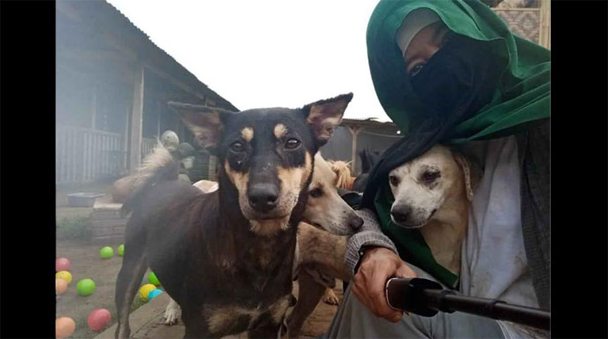 Ini Tentang Perempuan Bercadar Pemilik 70 Anjing di Bogor - JPNN.com